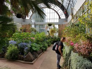 From winter to wintergardens in sunny Auckland's Domain