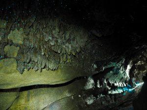 Glowworms at Waipu cave